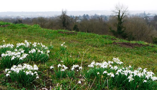 Snowdrops and The Kennet Valley on a cold day