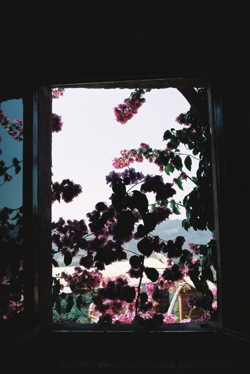 Bougainvillaea through my window