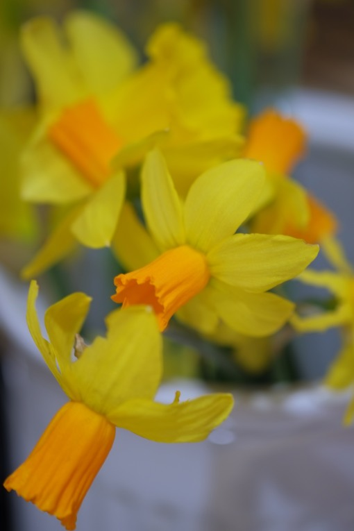 Daffs in macro