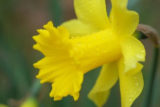 Raindrops on yellow
