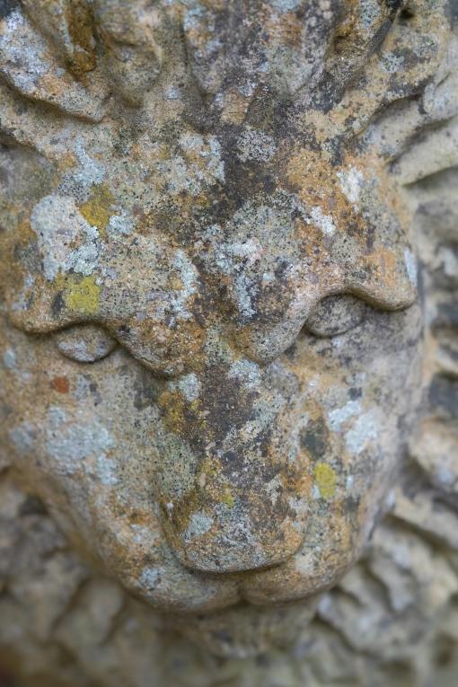 Lichen on a lion