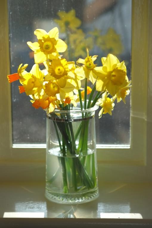 Daffodils and a dirty window, sunshine too