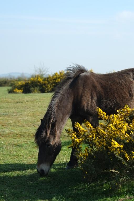 Greenham pony