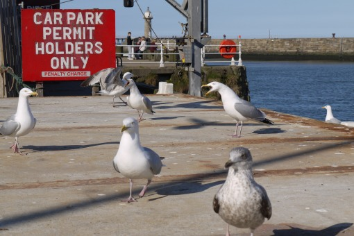 The Whitby debating society discuss car park permits!