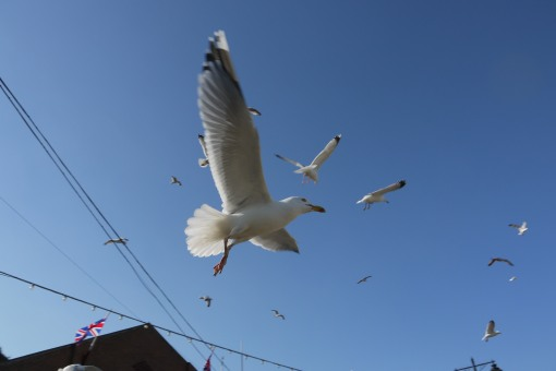 Seagulls, difficult to photograph!!