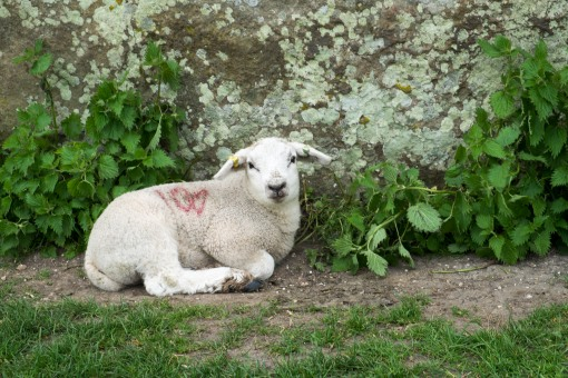 The Lamb at Avebury