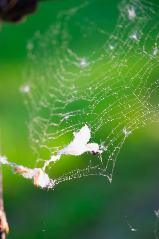 Web or Wool