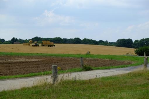 Summer Harvest.