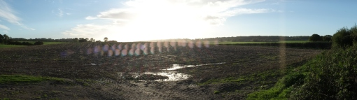 Sunny rainshower