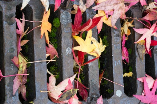 Autumn Colours: Leaves on a drain
