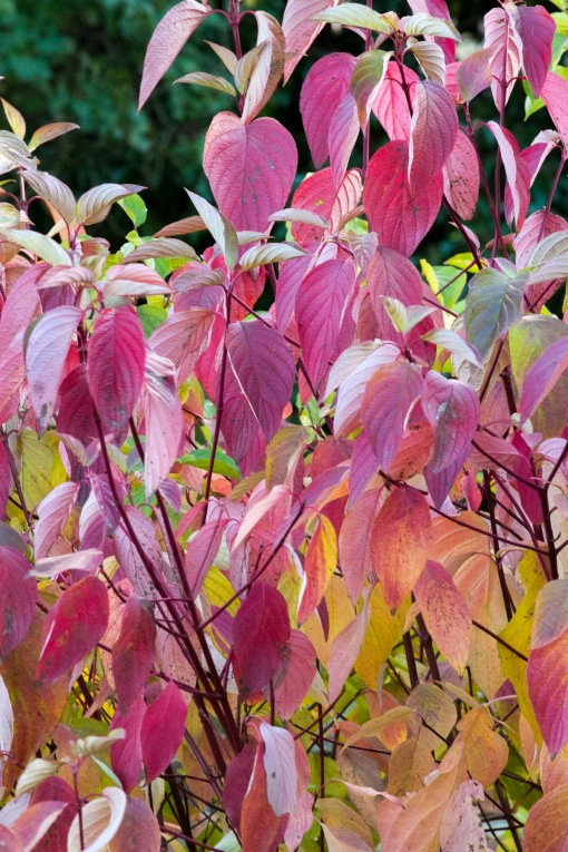 Autumn Colours:  Pink Hearts