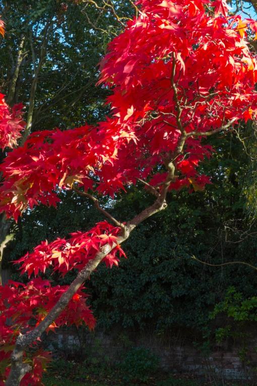 Vivid autumn!