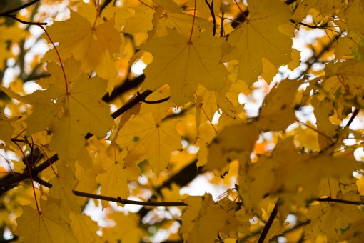 Autumn Colours: Yellows