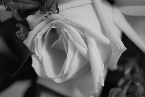 Wedding poesy, black and white