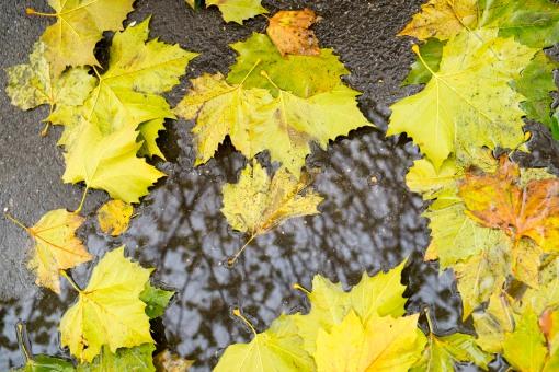 November leaves….