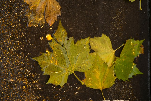 Wet leaves under a a sodium light