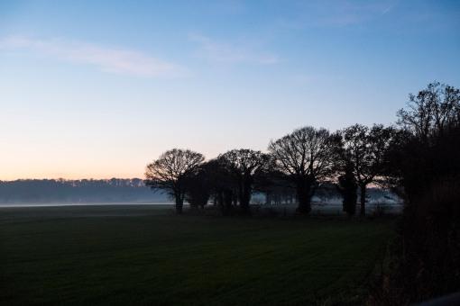 Trees get misty at dusk...