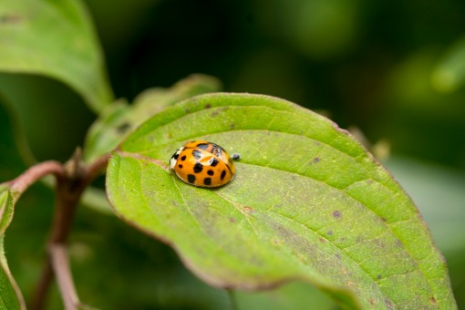 Last bug…..