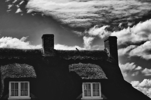Bird on a thatched cottage...