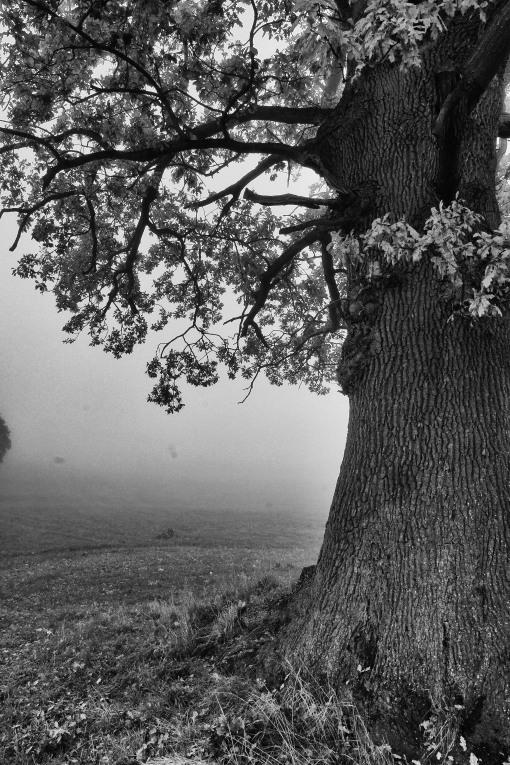 Patterns of an oak tree