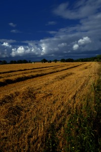 Northern fields