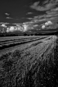 Northrn FIelds B&W