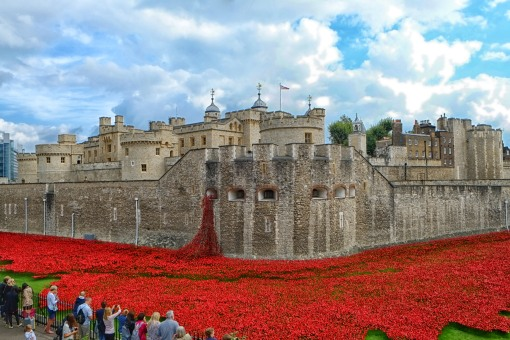 The poppies2