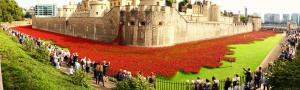 The Tower and Poppies